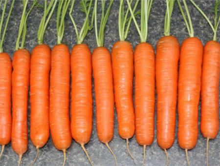 Какие овощи посадить в зиму на приусадебном участке