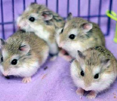 фото милых хомячков