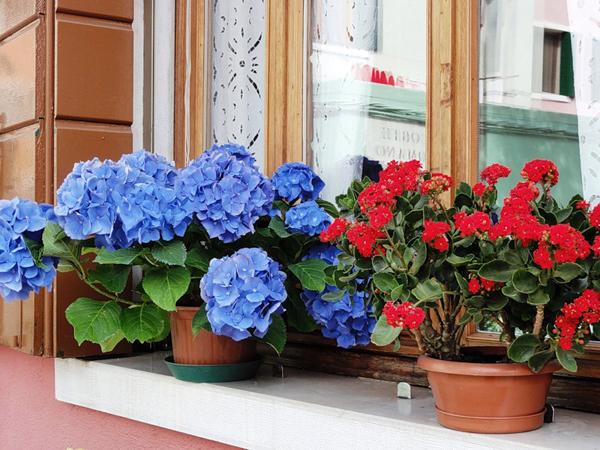 Неприхотливые комнатные цветы на 56