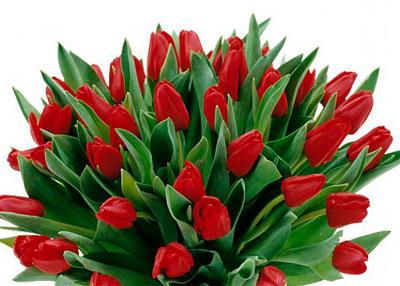 тюльпанов фотографии